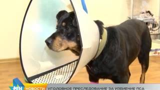 Сюжет от 14.10.2015 уголовное дело по избитой собаке