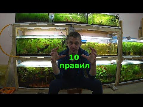 10 правил для 100% разведения рыбок