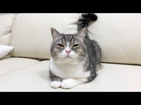 無視する猫を別の猫の名前で呼んでみたらこうなった…ww