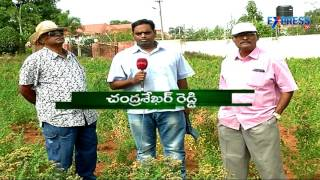 Quinoa farming Success stories from AP and Telangana - Express TV