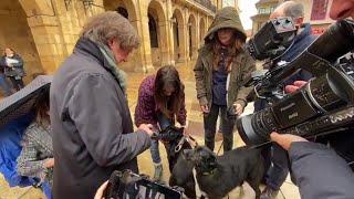 Oviedo potencia el microchip para localizar a las mascotas
