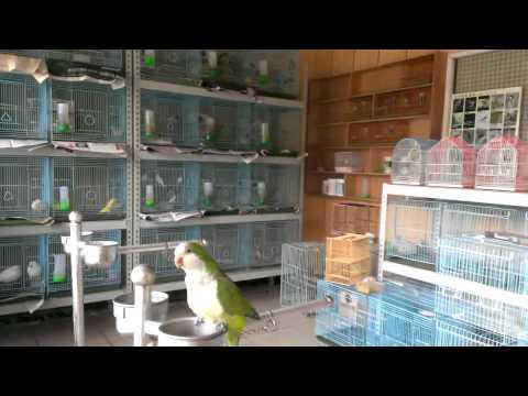 【楊梅新聞網】奇珍園種雞珍禽多養雞場直營