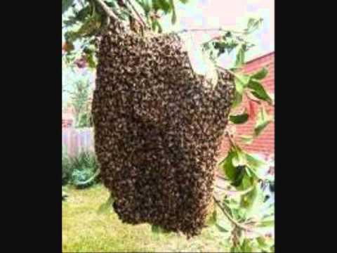 Love Bug Blues_031811.wmv