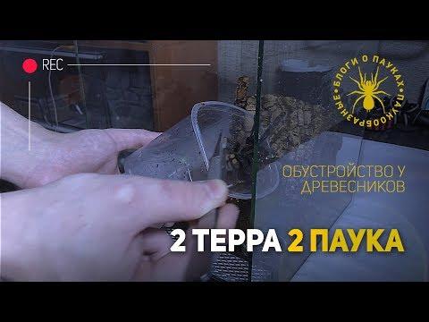 Видео: 2 терра и 2 паука