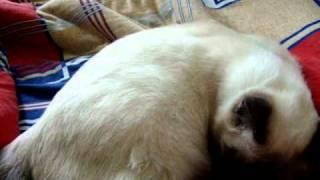 Шевеление котят