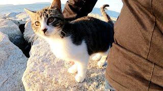 肌寒い海辺に行ったら可愛い猫兄弟が体をくっつけて甘えてきた