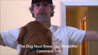 Dog Training Redirected Watch Me Command With Colby [hq]