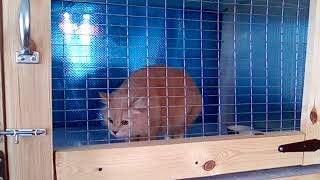 Домашняя гостиница для кошек восточного Подмосковья. 8-915-352-38-66