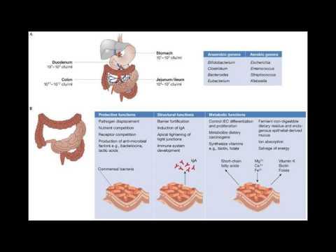 Normal flora of intestine