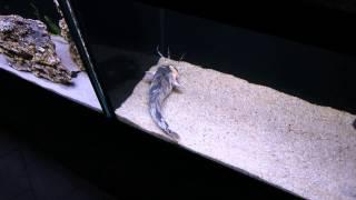 Аквариум в минском зоопарке.(группа вконтакте: http://vk.com/pgshelp1 сайт: https://sites.google.com/site/na5balov заказать работу: ..., 2014-07-23T16:20:25.000Z)