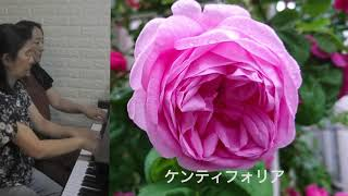 薔薇と音楽とFriendship シンデレラメドレー