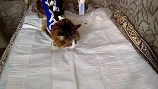 Обработка шва у кошки после стерилизации