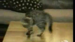 De leukste katten bloopers!