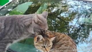 вот что можно назвать настоящий кошачий любовью Маяковский лимонки и моего кота банана