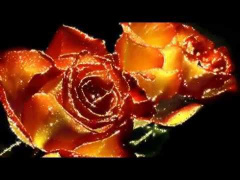 Песня я дарю тебе розы белые