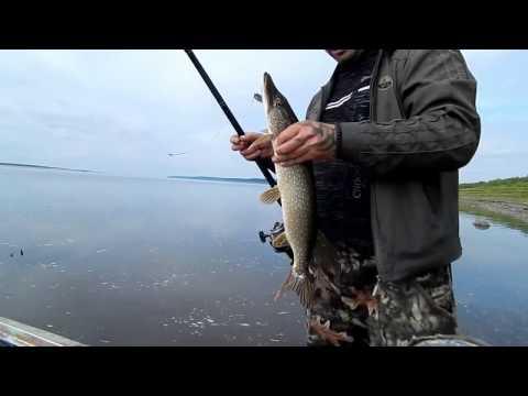 это не диалоги о рыбалке видео щука
