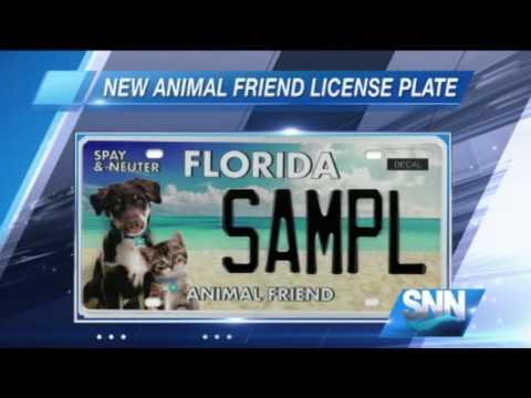 SNN : New 'Animal Friend' Florida License Plate