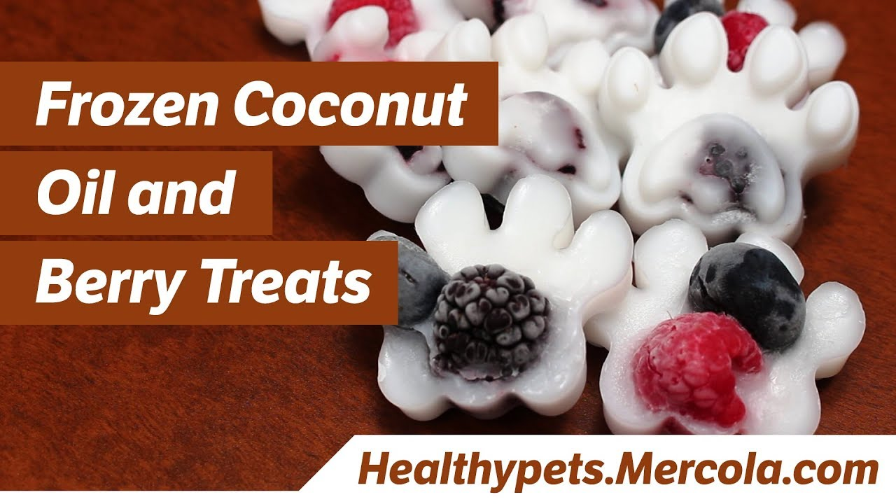 Is Coconut Oil Good for Dogs and Cats?