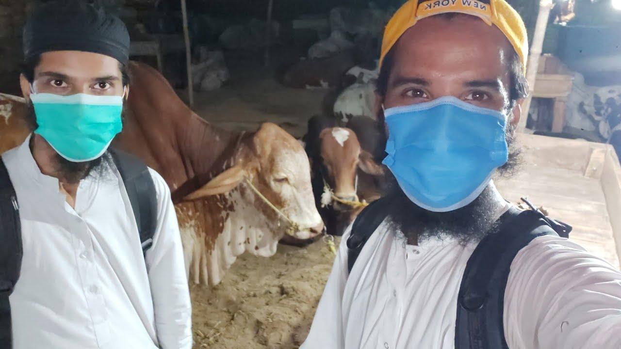 🔴 Live with AR Maani At Sohrab Goth Cow Mandi