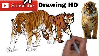 #Drawing Drawing tiger | black and orange tiger | របៀបគូររូប