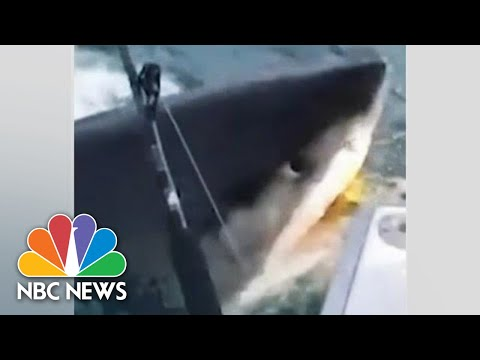 Scott - WATCH: Great White Comes Right Up To A Boat