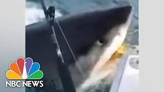 WATCH: Great White Shark Swims Up To Boat, Gives Fishermen A 'Jaws' Moment | NBC News