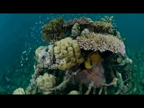 Fascinating Feature of Pemuteran's Underwater Temple