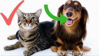OLD CATS & DOGS can be SUPER FUNNY TOO! - TRY NOT TO LAUGH |2018|