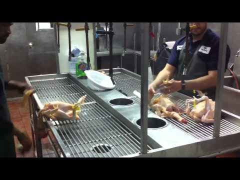 Halal live poultry