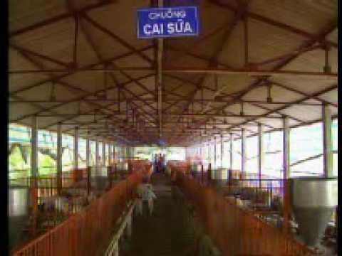 Thiết kế & chuẩn bị chuồng trại chăn nuôi lợn (http://cnty.huaf.edu.vn)