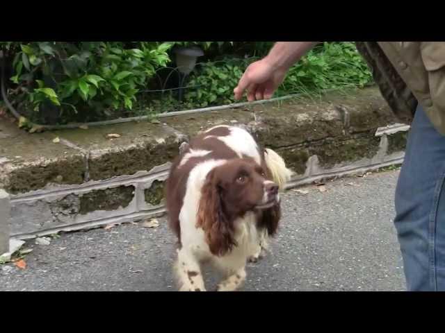 Caso neurologico cane razza Breton - Cellule staminali del sangue