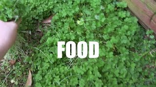Yeah, I'm weird. I like outside food... But hey, health benefits fo...