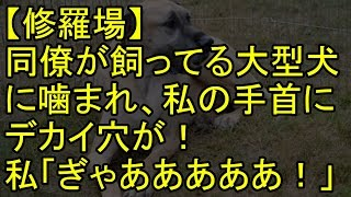 【修羅場】同僚が飼ってる大型犬に噛まれ、私の手首にデカイ穴が!私「...
