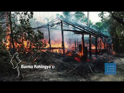 Burma: Methodical Massacre at Rohingya Village