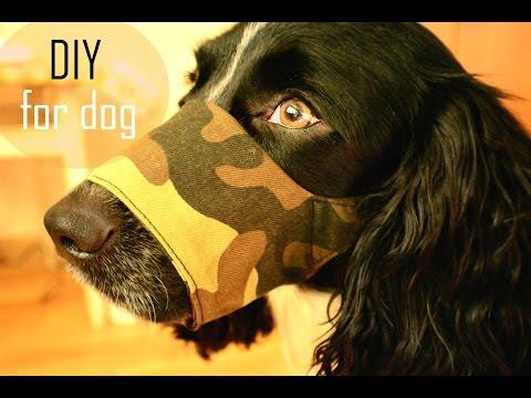 намордники для собак с приколами