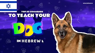Teach Your Dog Commands In Hebrew (20 Common Words)