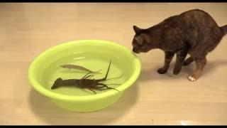 Лучший канал ¦ Приколы с котами    после рыбалки дома!!!! ржачно!!!