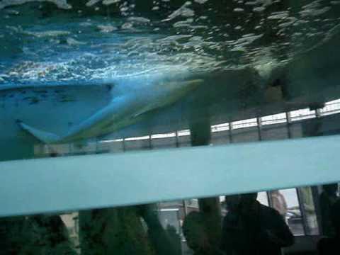 oceanarium rekiny Gdynia