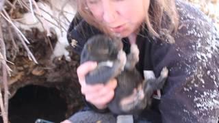 SCARS Puppy  Rescue, Winter 2014 -- Den Puppies