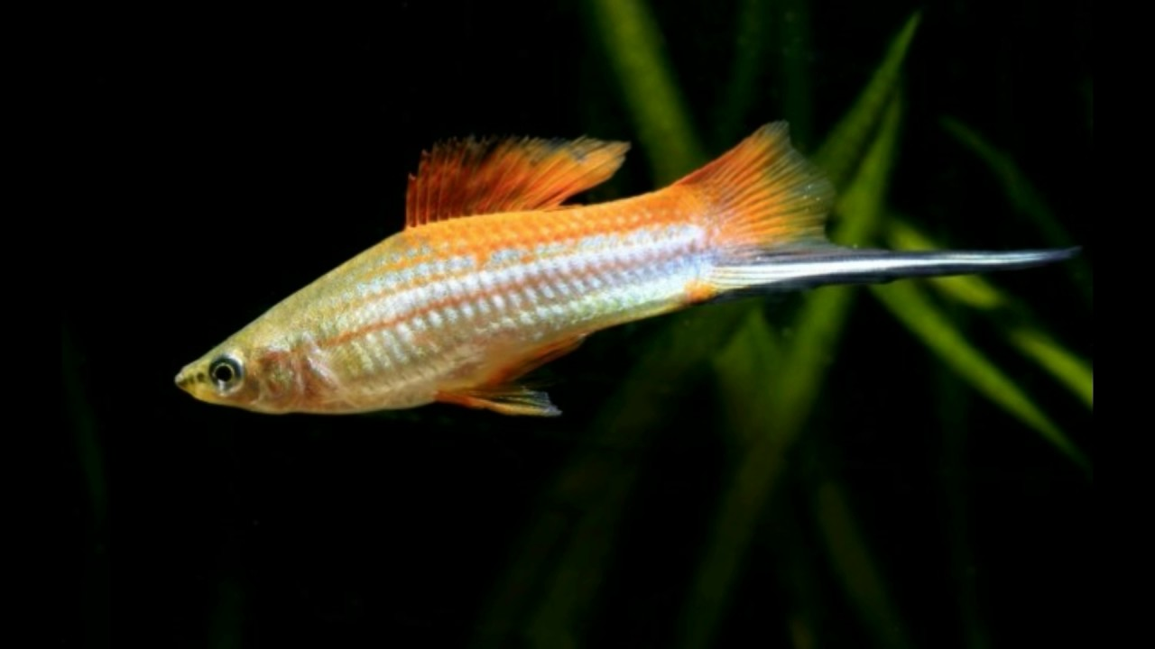 fish species best tropical fish species for beginners