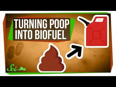 Purple Bacteria: Turning Poop Into Biofuel