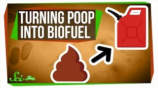 Purple Bacteria: Turning Poop Into Biofuel