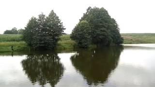 Озеро у д. Вертники. Рибалка. Відеосюжет.