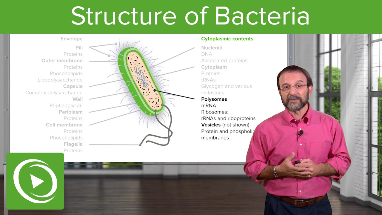 The Bacterial Interior: Components of a Bacterial Cell – Microbiology | Lecturio
