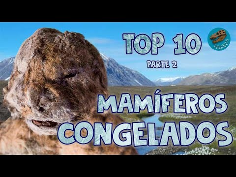 Top 10: Mamíferos congelados (parte 2) from YouTube · Duration:  16 minutes 25 seconds