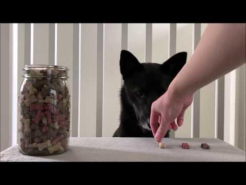 asmr-dog-eating-crunchy-milkbone-biscuits
