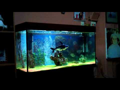 armenopoulos shark3