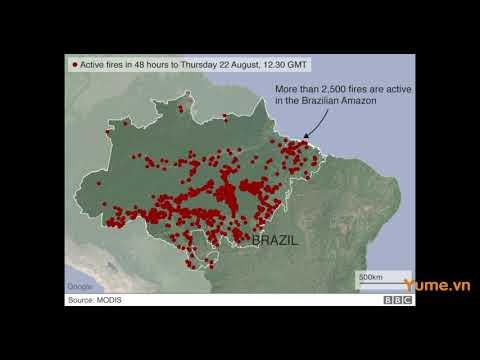 [TIN TỨC]   Rừng Amazon cháy suốt 16 ngày qua mà đến nay thế giới mới biết - Yume.vn