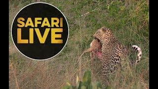 safariLIVE - Sunrise Safari - May, 16. 2018 thumbnail