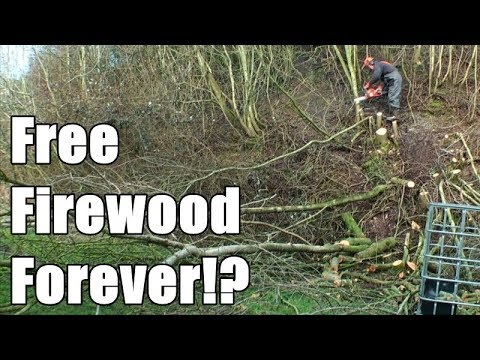 Making the most of a tiny woodland (by coppicing)